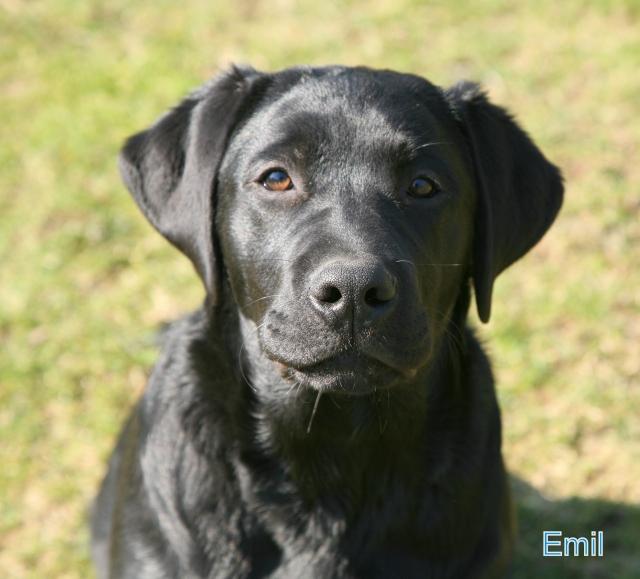 Emil 1 2014/03/30