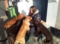 Alla hundar Kivik v8. 2012 II