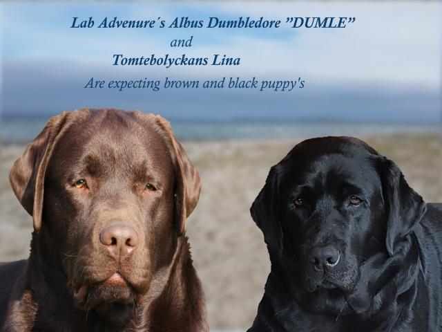 Dumle en Lina verwachten pups